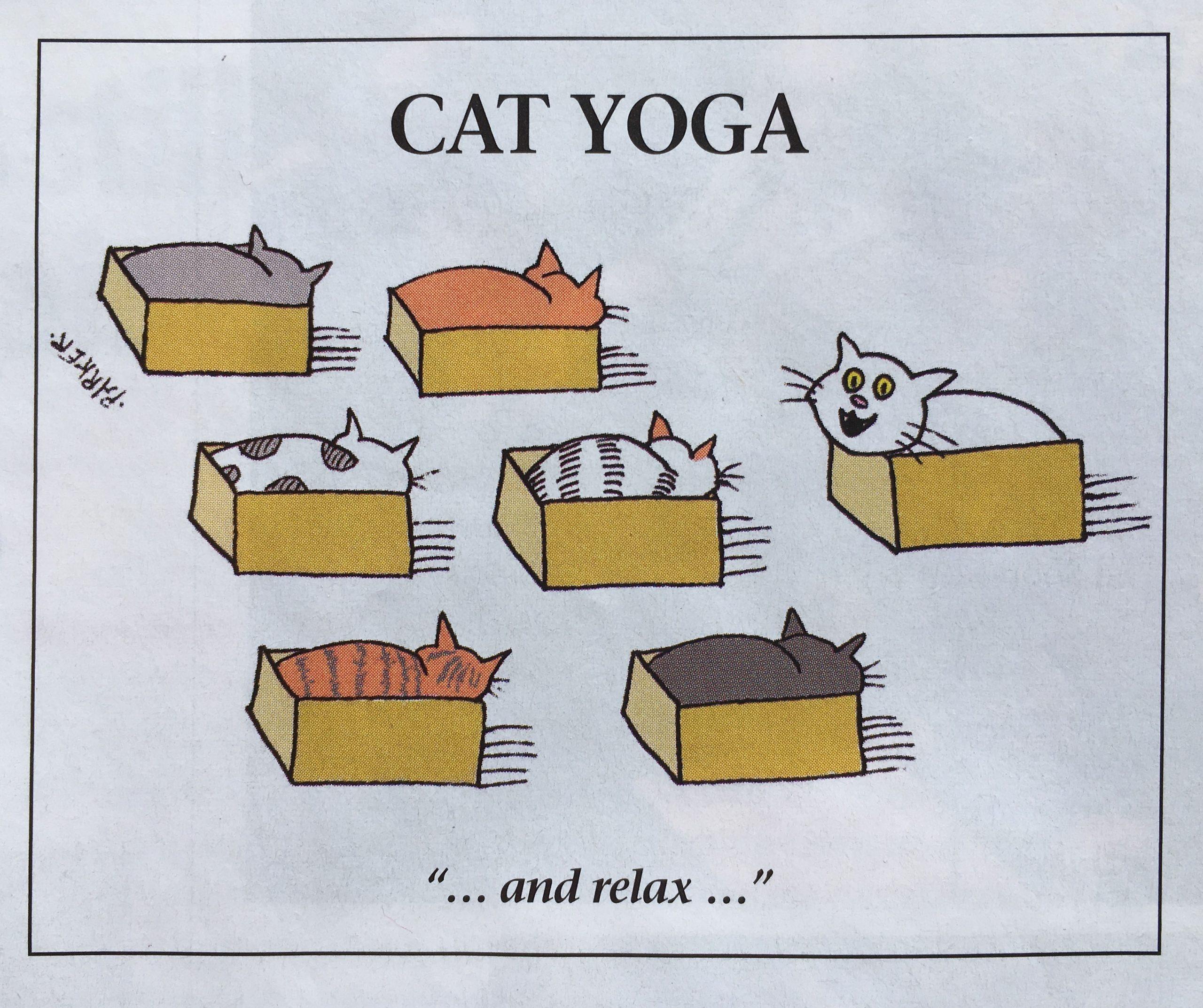 Cat Yoga_2